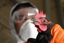 Внимание! Высокопотогенный грипп птиц
