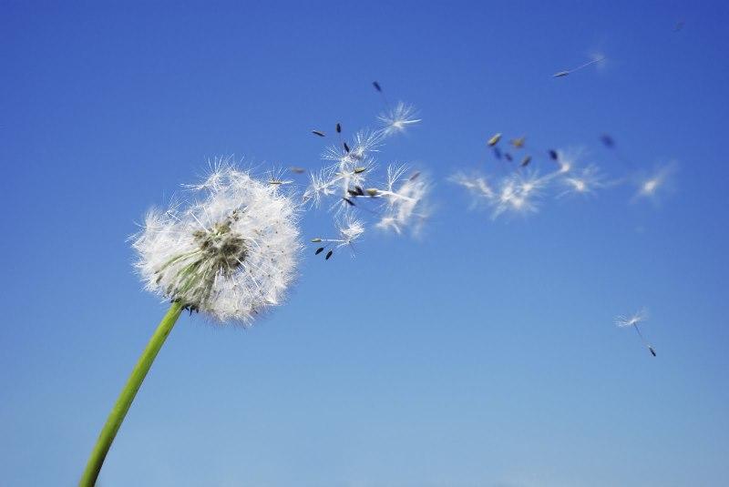 Синоптики предупредтают о сильном ветере