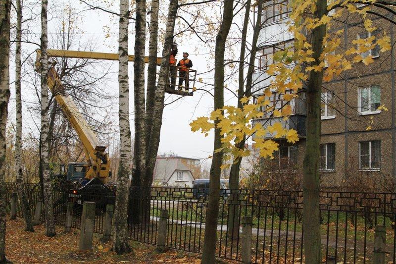 С улиц Рыбинска убирают аварийные деревья