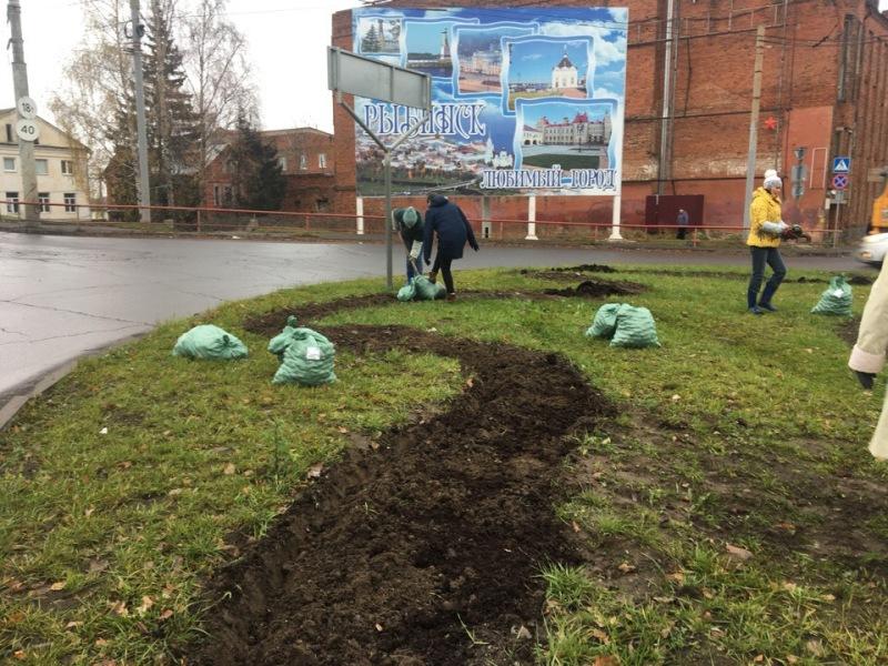 В Рыбинске на городских клумбах высадили тюльпаны