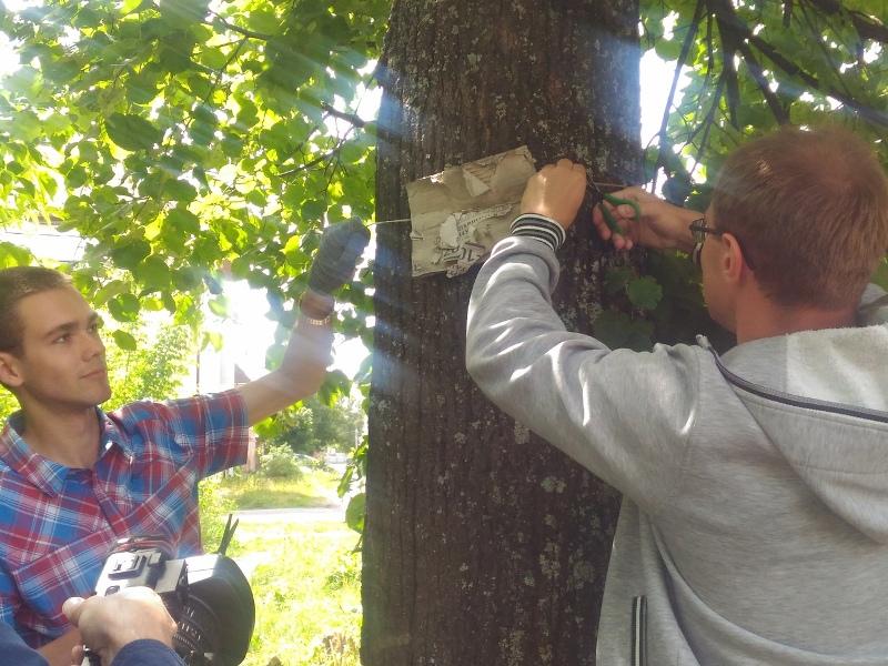 Рыбинских активистов призвали на борьбу с рекламой на деревьях